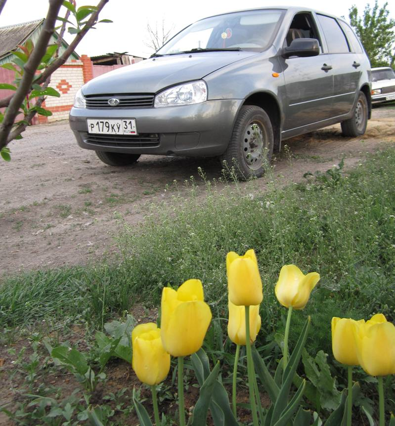 Лада Калина весной на фоне желтых тюльпанов
